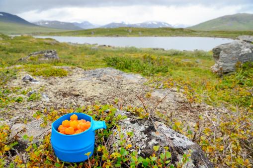Hiking「Blue mug with cloudberries in arctic landscape」:スマホ壁紙(17)
