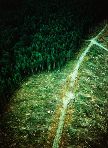 Deforestation「Clearcut Forest」:スマホ壁紙(4)