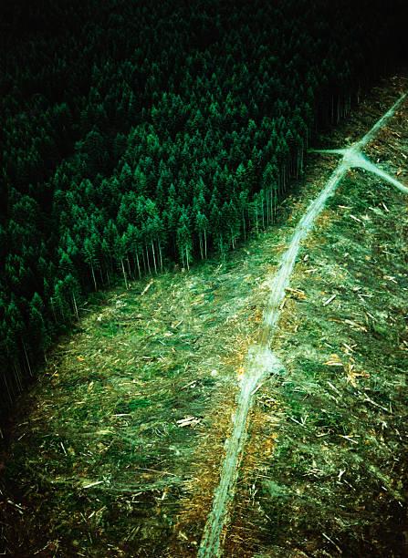Clearcut Forest:スマホ壁紙(壁紙.com)
