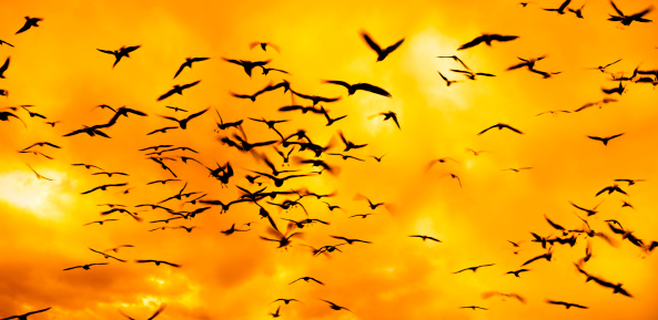 Seagull「group of flying birds over sunset」:スマホ壁紙(2)
