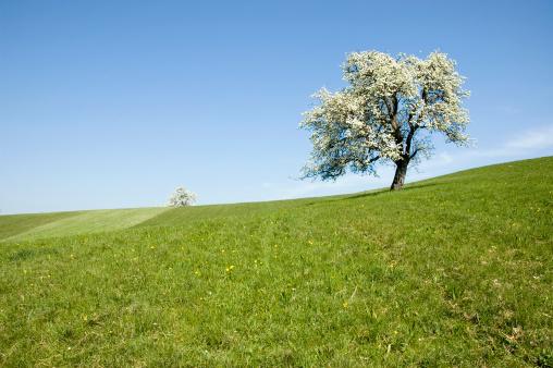 朗らか「美しい春の風景」:スマホ壁紙(5)