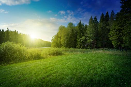 Pine Tree「Beautiful sunset over forest lake」:スマホ壁紙(18)