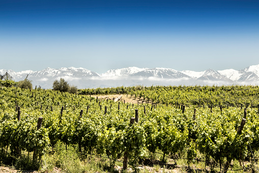 Ecosystem「Beautiful South American vineyard in Tupungato, Mendoza, Argentina.」:スマホ壁紙(9)