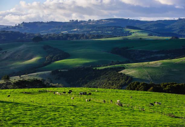Beautiful scenery in the hinterland of Northland, North Island, New Zealand:スマホ壁紙(壁紙.com)