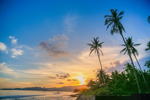 Palm tree「熱帯の楽園の美しい夕日」:スマホ壁紙(19)