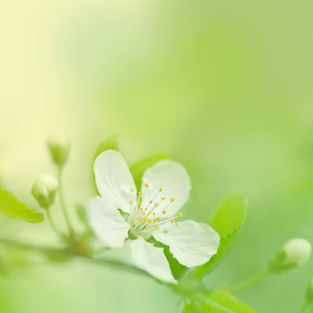 美しい春:スマホ壁紙(壁紙.com)