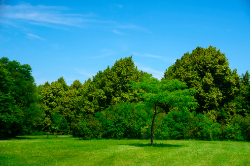Woodland「Beautiful Summer Landscape with Green Trees」:スマホ壁紙(18)
