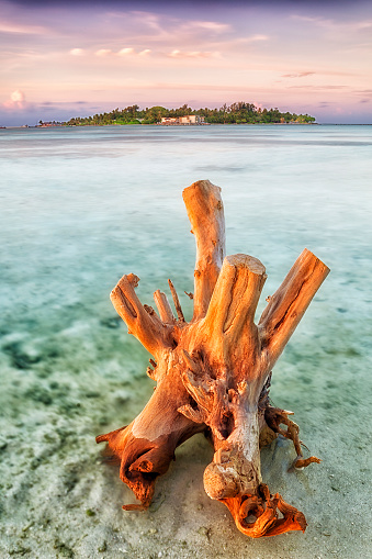 Driftwood「Beautiful sunset on the paradise island of Guraidhoo. Maldives」:スマホ壁紙(7)