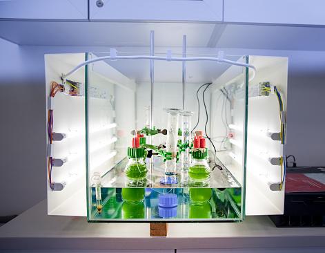 Algae「Algae Experiment in Controlled Environment」:スマホ壁紙(8)