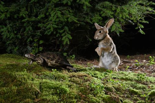大昔の「Hare and tortoise」:スマホ壁紙(14)