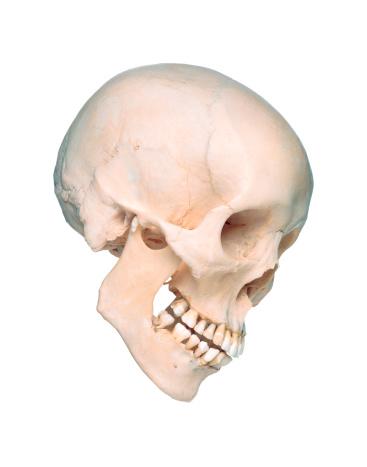 ドクロ「Skull in Profile」:スマホ壁紙(18)