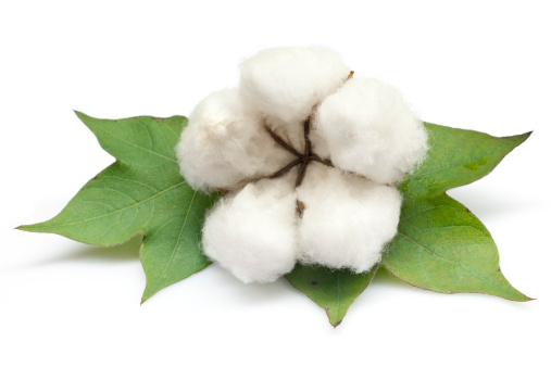 Dietary Fiber「Cotton」:スマホ壁紙(9)