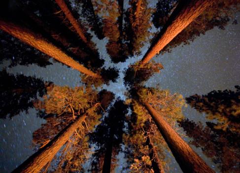 オカナガン国定森林「Night sky through trees」:スマホ壁紙(1)