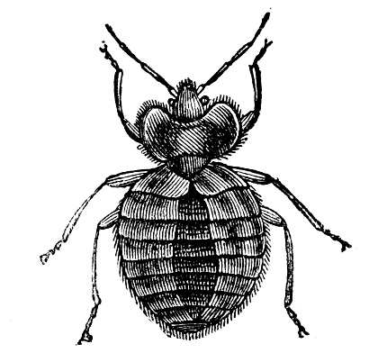 19th Century「bed bug」:スマホ壁紙(4)