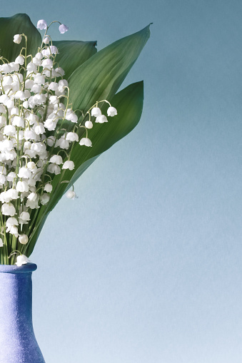 Birthday Card「Lilies Of The Valley (Convallaria Majalis) - bouquet of flowers in a vase  on a blue background」:スマホ壁紙(5)