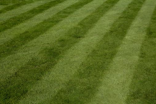 Focus On Background「Rich Mowed Lawn」:スマホ壁紙(6)