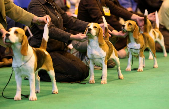 In A Row「Best In Show Announced At Crufts」:写真・画像(0)[壁紙.com]