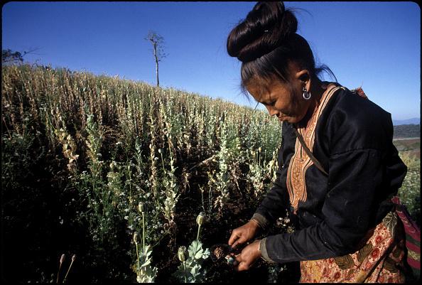 Alex Bowie「Opium Harvest」:写真・画像(12)[壁紙.com]