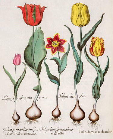 Manuscript「Hand painted tulips」:スマホ壁紙(14)