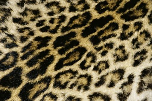Leopard pattern「Leopard print pattern」:スマホ壁紙(10)