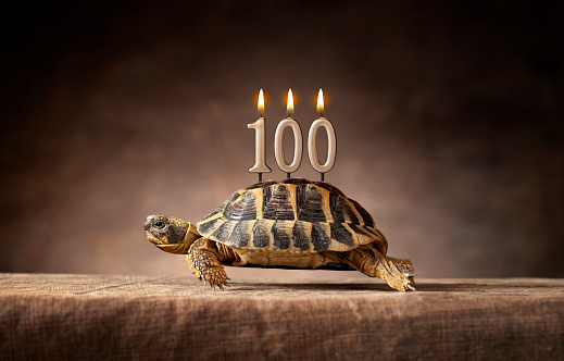 Birthday Card「100 years. Happy birthday. Old turtle.」:スマホ壁紙(15)