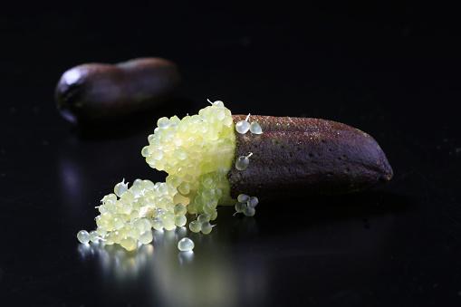 おしゃれ「Finger Lime (Citrus australasica)」:スマホ壁紙(19)