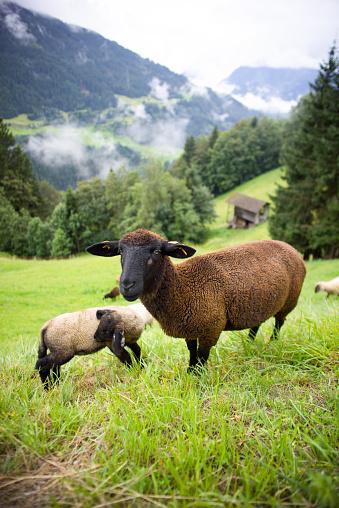 Steep「Flock of Sheep」:スマホ壁紙(6)