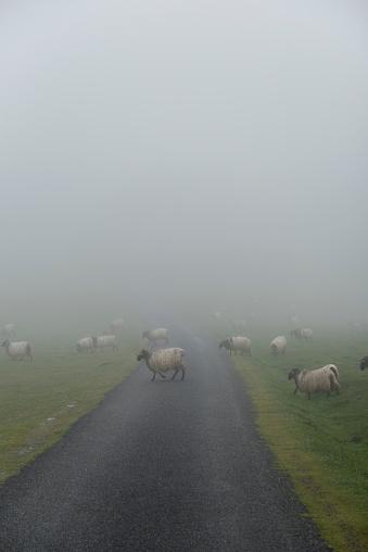 Camino De Santiago「Flock of sheep crossing road on Camino de Santiago」:スマホ壁紙(0)