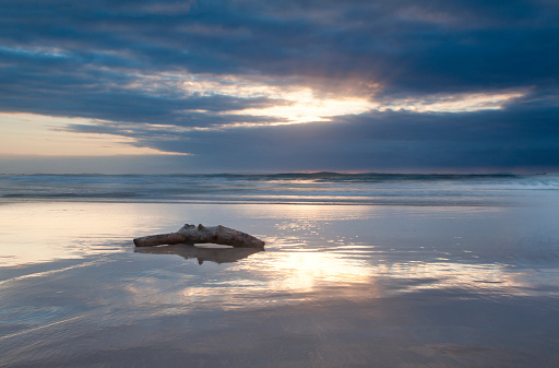 Driftwood「Driftwood lying on a beach at sunrise with a reflection on the wet sand, Cape Vidal South Africa」:スマホ壁紙(3)