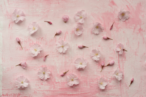 Cherry Blossom「Pink cherry blossoms, close up」:スマホ壁紙(1)