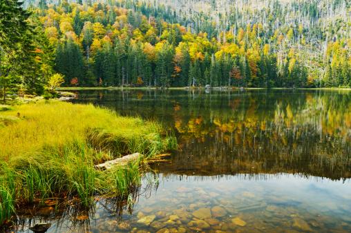 Bavarian Forest「Rachelsee (Rachel Lake)」:スマホ壁紙(7)