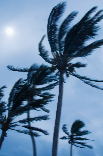 Atlantic Islands「Tropical storm blowing palm trees, Bermuda」:スマホ壁紙(9)