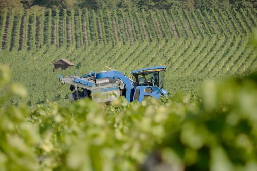 Focus On Background「Harvester in vineyard」:スマホ壁紙(6)