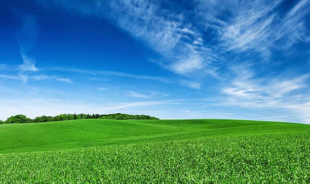 Panoramic spring landscape XXXXL 45 MPix- green field, blue sky:スマホ壁紙(壁紙.com)