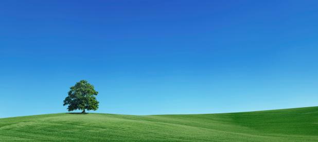Pasture「Panoramic spring landscape 55MPix - XXXXL size」:スマホ壁紙(17)