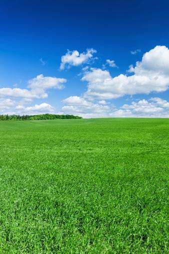Photography Themes「Panoramic spring landscape XXXXL 41 MPix- green field, blue sky」:スマホ壁紙(8)