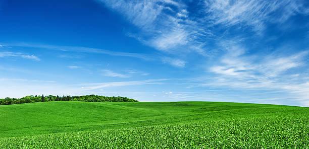 パノラマに広がる春の風景 XXXXL 28 MPix-グリーンフィールド、ブルースカイ:スマホ壁紙(壁紙.com)