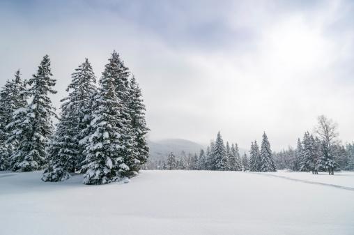 雪山「ユキコ冬の森林のパノラマに広がる風景」:スマホ壁紙(6)