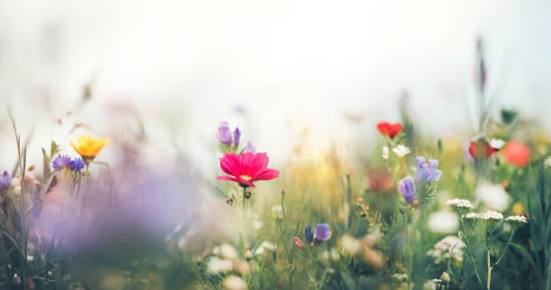 パノラマの夏の草原:スマホ壁紙(壁紙.com)