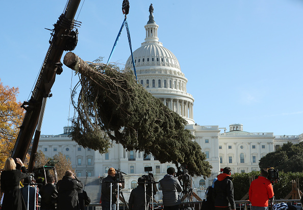 Pinaceae「U.S. Capitol Christmas Tree Arrives Ahead Of Official Lighting」:写真・画像(2)[壁紙.com]