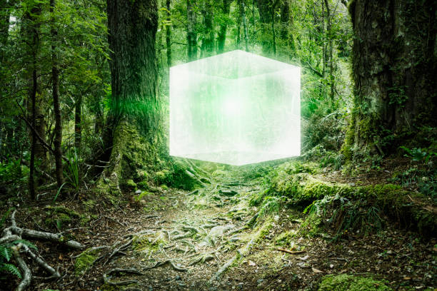Glowing cube floating in forest:スマホ壁紙(壁紙.com)