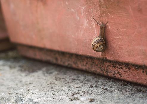 カタツムリ「Snail creeping upwards」:スマホ壁紙(6)