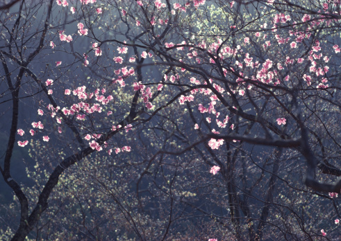 Nikko City「Azalea」:スマホ壁紙(12)