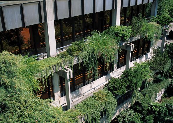葉・植物「Hanging plants decorating office building」:写真・画像(12)[壁紙.com]
