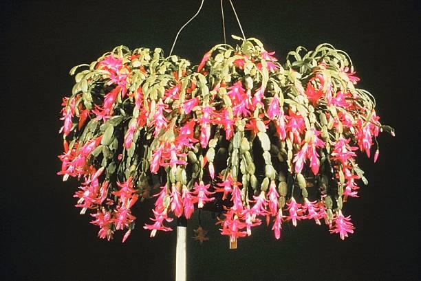 Hanging plant:スマホ壁紙(壁紙.com)