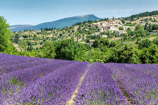 Plateau De Valensole「Gordes , Province France as background of the lavender field during summer」:スマホ壁紙(18)