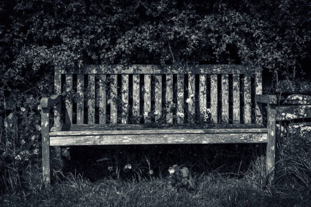 Old wooden park bench against an overgrown hedge and grass verge:スマホ壁紙(壁紙.com)