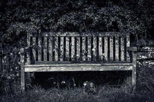 モノクロ「Old wooden park bench against an overgrown hedge and grass verge」:スマホ壁紙(14)