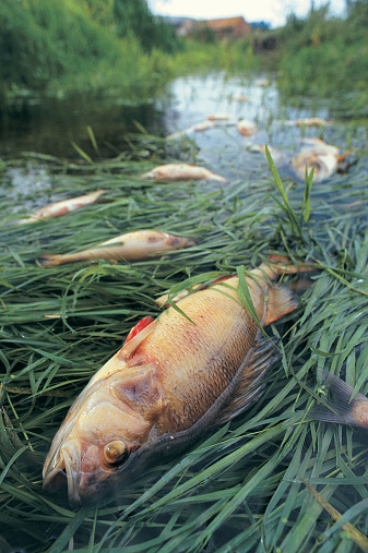 バイパス「Dead fish resulting from incident at Sewage Works,UK」:スマホ壁紙(5)