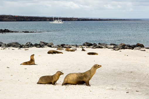 Sea Lion「Mother and child sea lions, Galapagos Islands」:スマホ壁紙(14)